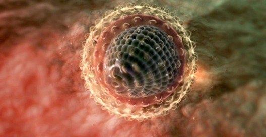 Як передається гепатит з?
