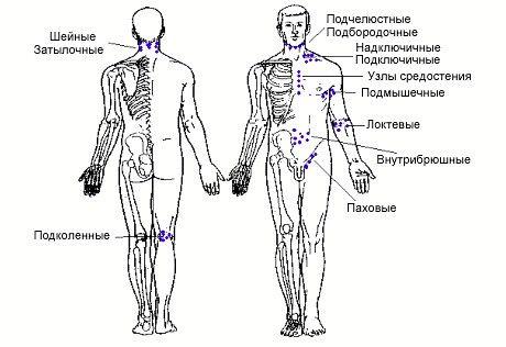 Де знаходяться лімфовузли у людини
