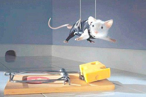 Як позбутися мишей