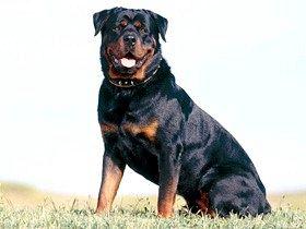 Мітки собак і їх важливість