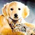 Чому собаки не люблять котів?