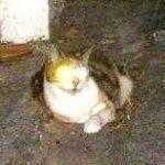 Чому у кішок світяться очі вночі?
