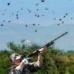Чому навесні заборонено полювання?