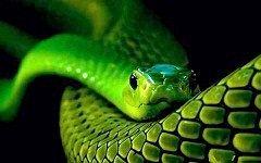 До чого сняться змії?
