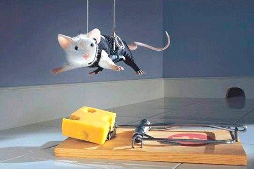 Як позбутися мишей в квартирі?