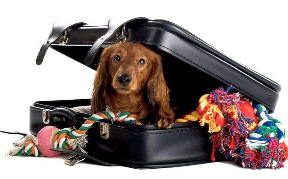Як подорожувати з собакою? (Рекомендації)