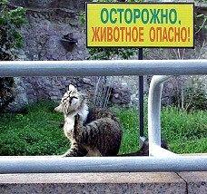 Яка тварина найнебезпечніше?