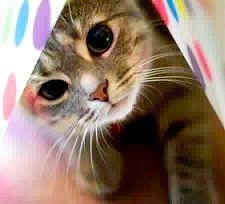 Чому люди люблять котів?