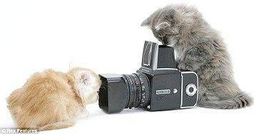 Чому не можна фотографувати кішок?