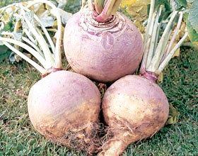 Чи корисна бруква? Як її вирощувати і з чим є?