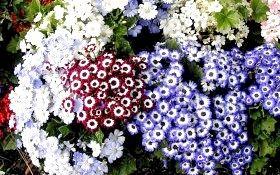 Розсада квітів - садимо насіння, фото і відео