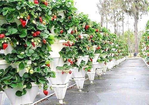 Вертикальне вирощування рослин - як зробити вертикальні грядки