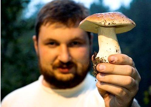 Як збирати гриби?