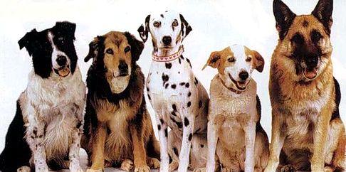 Яку породу собак вибрати?