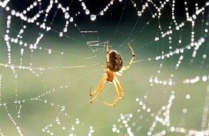 Чому не можна вбивати павуків?