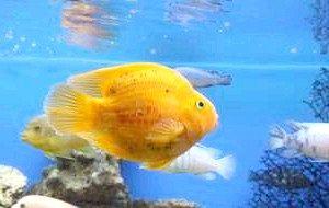 Підвищилася смертність в акваріумі? З'ясуй причину