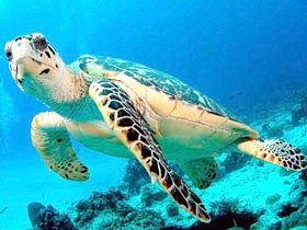 Скільки років живуть черепахи