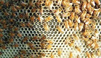 Правильний догляд за бджолами взимку