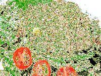 Смачний і шалено популярний крабовий салат